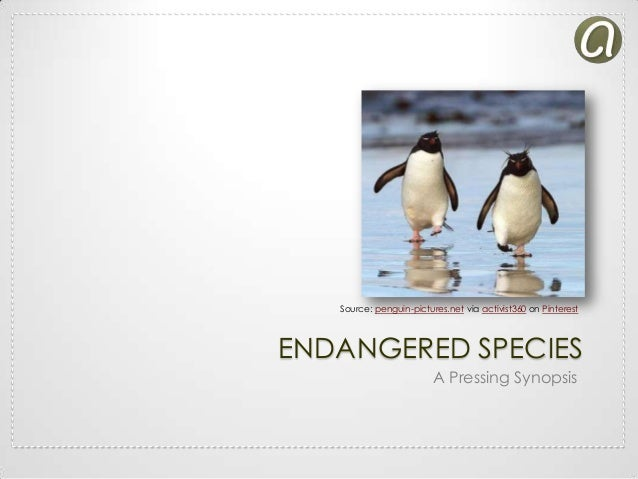 Source: penguin-pictures.net via activist360 on Pinterest  ENDANGERED SPECIES A Pressing Synopsis