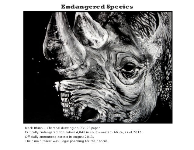 "Black Rhino - Charcoal drawing on 9""x12"" paper Critically Endangered Population 4,848 in south-western Africa, as of 2012...."