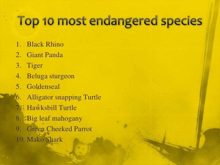 Top 10 endangered animal species in