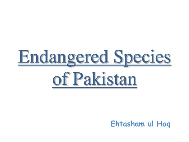 endangered species of pakistan Pakistan is home to a versatile and potent wildlife, which sadly, is running low on  numbers endangered species all over the world get special.