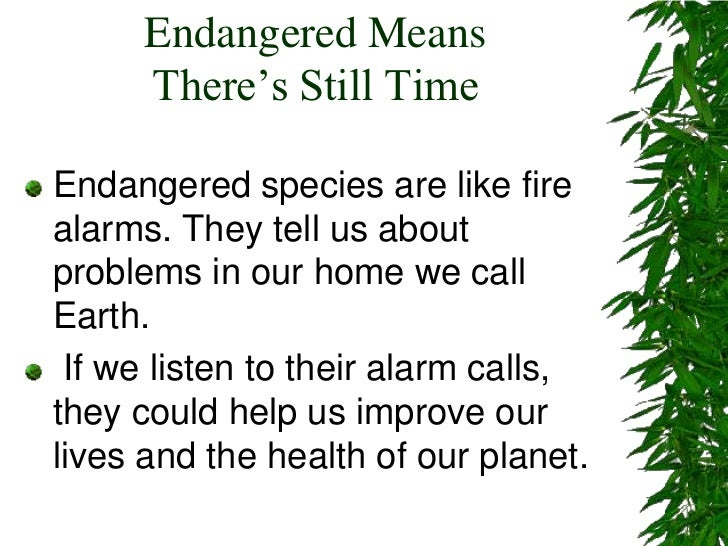 Endangered Means There's Still Time<br />Endangered species are like fire alarms. They tell us about problems in our home ...