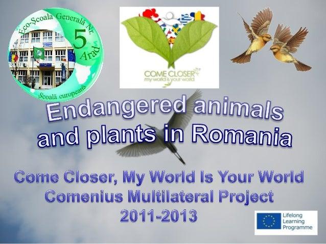 The chamoisThe chamois(Rupicapra rupicapra)(Rupicapra rupicapra)• The chamois is a goat-like animalThe chamois is a goat-l...