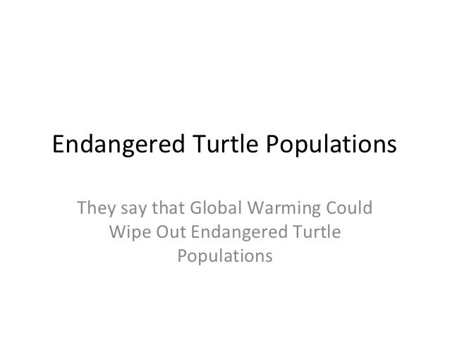 Endangered Turtle Populations  They say that Global Warming Could     Wipe Out Endangered Turtle              Populations