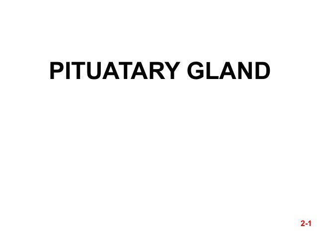 PITUATARY GLAND  2-1