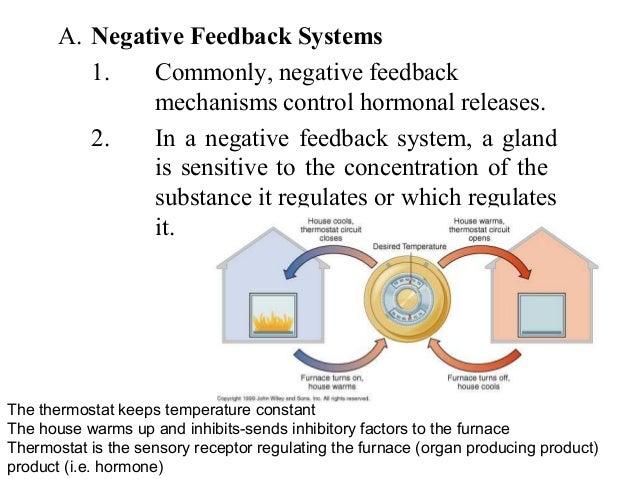 enzyme furnace endocrine system outline of major players1556
