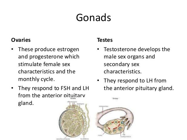 hormones that stimulate female secondary sex characteristics in Guelph