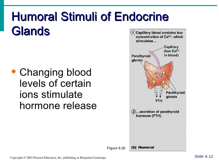 glands endocrine minus notes ch humoral stimuli system pearson figure hormones