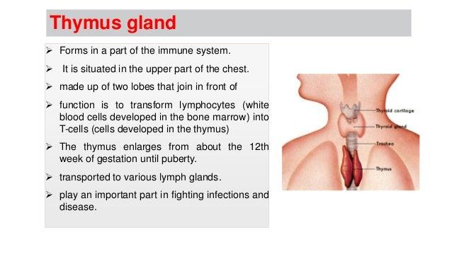 Endocrine System and Endocrine Glands