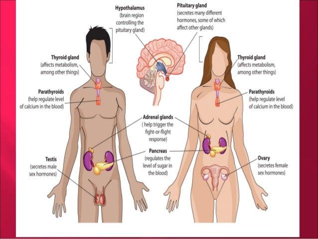 endocrine system, Cephalic Vein