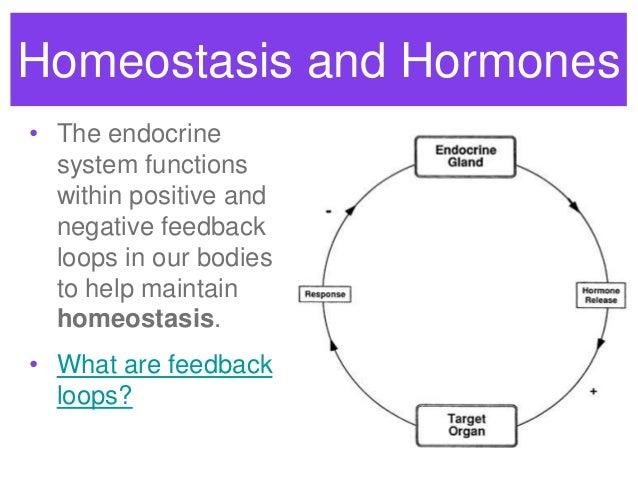 Endocrine system feedback loops the endocrine system feedback loops and homeostasis 2 ccuart Images