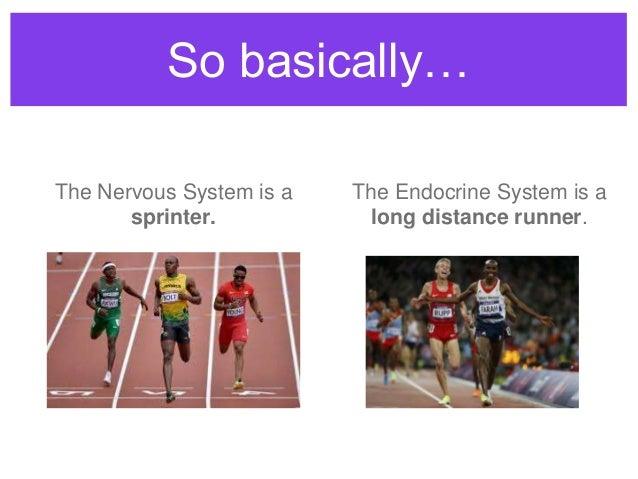 Endocrine system endocrine v nervous system the nervous system is a sprinter the endocrine system is a long ccuart Image collections