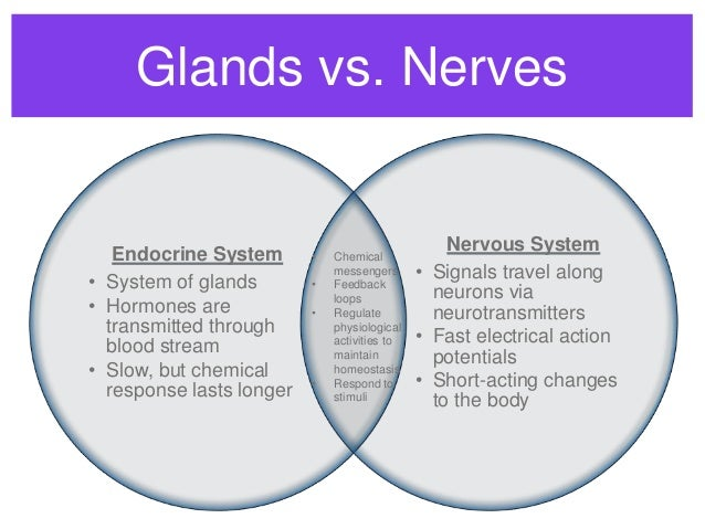 Venn Diagram Of The Nervous System House Wiring Diagram Symbols