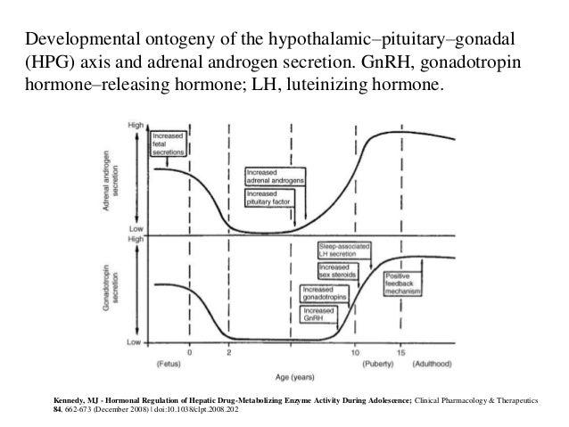 Endocrine System Basics