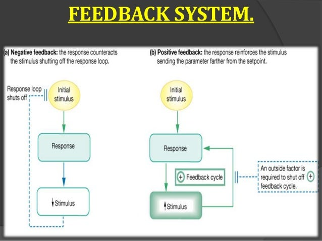 Endocrine system basic feedback system figure 6 26 negative and positive feedback ccuart Gallery