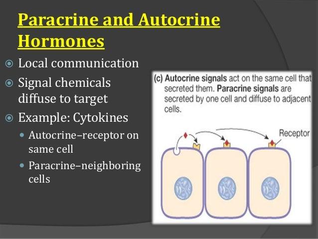 Endocrine System Basic