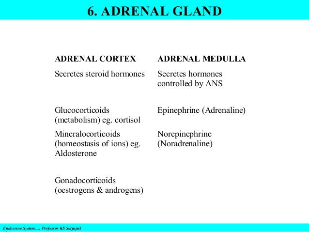 Endocrine System Disorders Gland By Gland