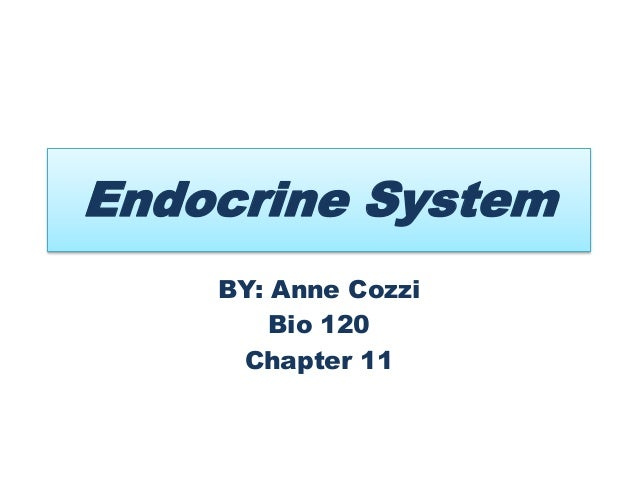 Endocrine System BY: Anne Cozzi Bio 120 Chapter 11