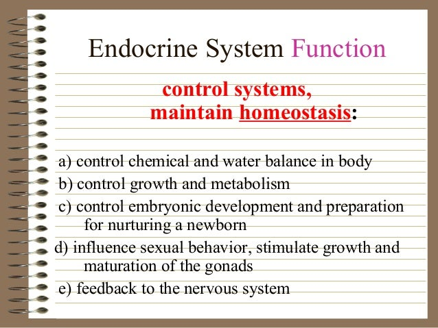 Endocrine System Function control systems, maintain homeostasis: a) control chemical and water balance in body b) control ...