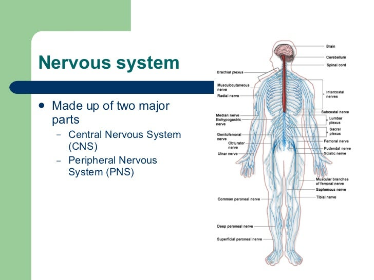 endocrine vs nervous system essays Neurotransmitters - the nervous system nervous system vertebrates vs invertebrates physical education the main functions of the nervous system new topic relationship between nervous system and endocrine system new topic components of nervous system involved in physical sensation nervous conditions system new topic nervous conditions chapter summary bookings system defense system delivery system.