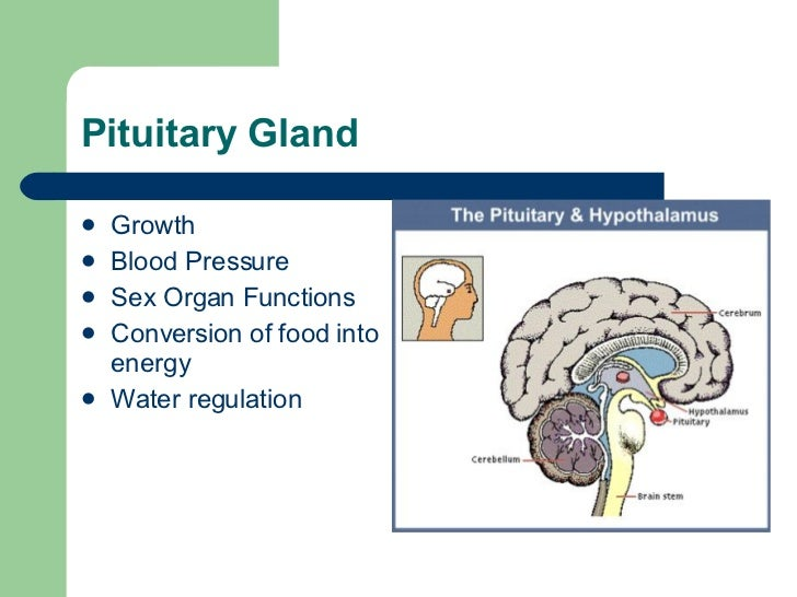 "Pituitary Gland   <ul> <li>Growth </li> </ul> <ul> <li>Blood Pressure  </li> </ul> <ul> <li>Sex Organ Functions </li> </ul> <ul> <li>Conversion of food  into energy …""/></a><br /> <h2>Girl On Girl (Nasty Montana</h2> <p><iframe height=481 width=608 src="