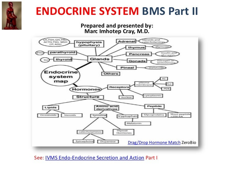 ENDOCRINE SYSTEM BMS Part II                   Prepared and presented by:                    Marc Imhotep Cray, M.D.      ...