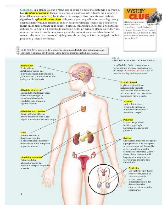 El sistema Endocrino.