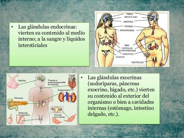 Anatomía, fisiología y patologías del sistema Endocrino