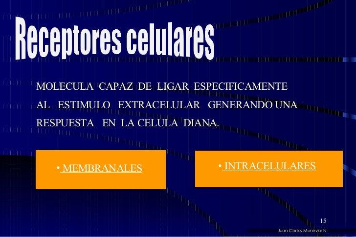 MOLECULA  CAPAZ  DE  LIGAR  ESPECIFICAMENTE  AL  ESTIMULO  EXTRACELULAR  GENERANDO UNA  RESPUESTA  EN  LA CELULA  DIANA.  ...