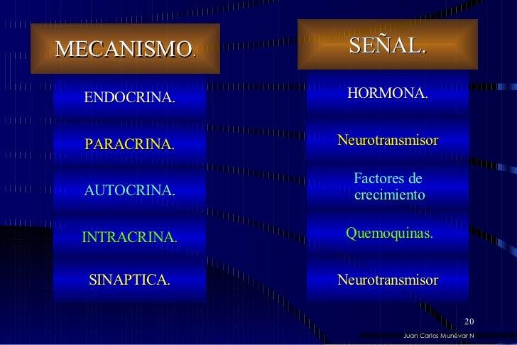 Juan Carlos Munévar N MECANISMO . INTRACRINA. AUTOCRINA . PARACRINA . SINAPTICA. SEÑAL. Factores de crecimiento Neurotrans...