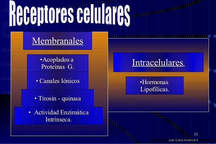 <ul><li>Acoplados a  </li></ul><ul><li>Proteínas  G. </li></ul><ul><li>Canales Iónicos </li></ul>Membranales <ul><li>Tiros...