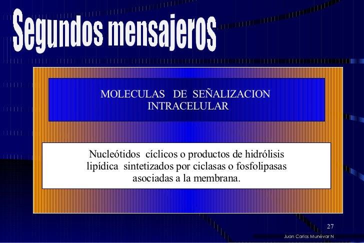 MOLECULAS  DE  SEÑALIZACION  INTRACELULAR Nucleótidos  cíclicos o productos de hidrólisis lipídica  sintetizados por cicla...