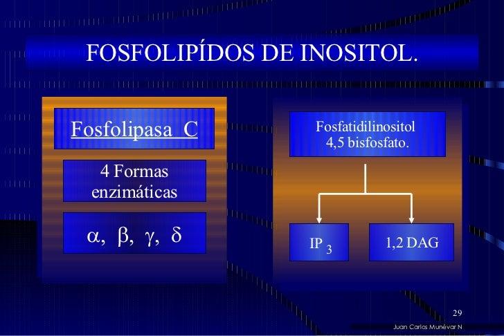 Juan Carlos Munévar N FOSFOLIPÍDOS DE INOSITOL. 4 Formas enzimáticas  ,   ,   ,   Fosfolipasa  C Fosfatidilinositol  4...