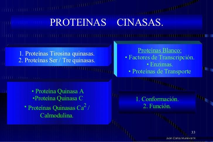 PROTEINAS  CINASAS. <ul><li>Proteínas Blanco: </li></ul><ul><li>Factores de Transcripción. </li></ul><ul><li>Enzimas. </li...