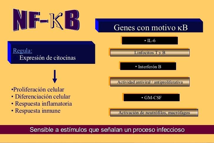 Genes con motivo   B <ul><li>IL-6 </li></ul><ul><li>GM-CSF </li></ul><ul><li>Interferón   </li></ul><ul><li>Regula: </li...