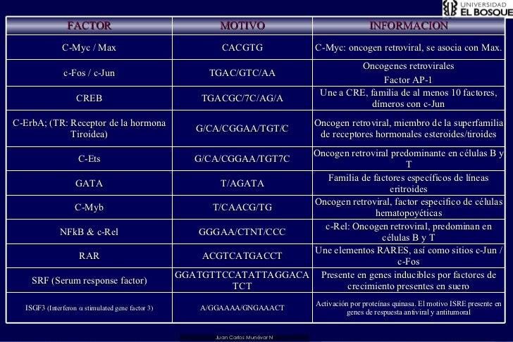 Juan Carlos Munévar N FACTOR MOTIVO INFORMACION C-Myc / Max CACGTG C-Myc: oncogen retroviral, se asocia con Max. c-Fos / c...