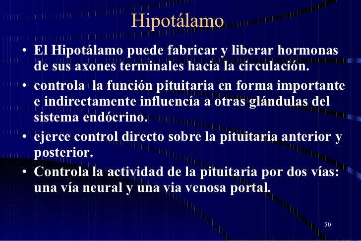 Hipotálamo <ul><li>El Hipotálamo puede fabricar y liberar hormonas de sus axones terminales hacia la circulación.  </li></...