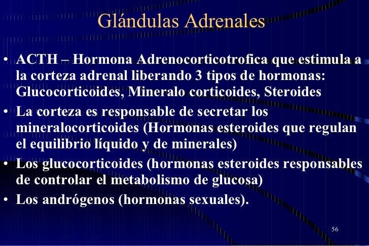 Glándulas Adrenales <ul><li>ACTH – Hormona Adrenocorticotrofica que estimula a la corteza adrenal liberando 3 tipos de hor...