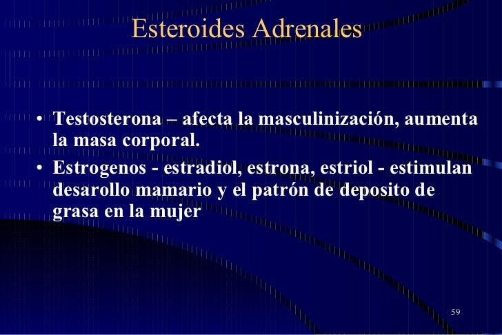 Esteroides Adrenales <ul><li>Testosterona – afecta la masculinización, aumenta la masa corporal. </li></ul><ul><li>Estroge...