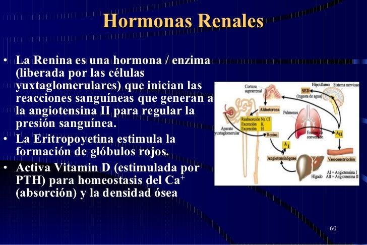 Hormonas Renales <ul><li>La Renina es una hormona / enzima (liberada por las células yuxtaglomerulares) que inician las re...