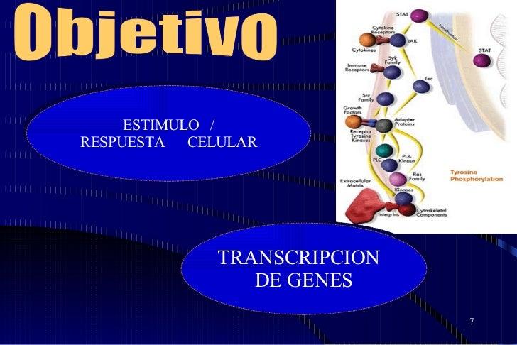 TRANSCRIPCION  DE GENES ESTIMULO  / RESPUESTA  CELULAR Objetivo