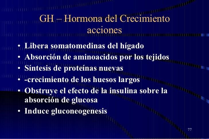 GH – Hormona del Crecimiento acciones <ul><li>Libera somatomedinas del hígado  </li></ul><ul><li>Absorción de aminoacidos ...