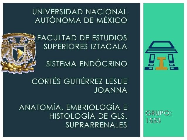 UNIVERSIDAD NACIONAL AUTÓNOMA DE MÉXICO FACULTAD DE ESTUDIOS SUPERIORES IZTACALA  SISTEMA ENDÓCRINO CORTÉS GUTIÉRREZ LESLI...