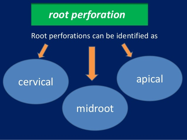 root perforation con't            These are usually caused by three errors:            creating a ledge and persisting unt...