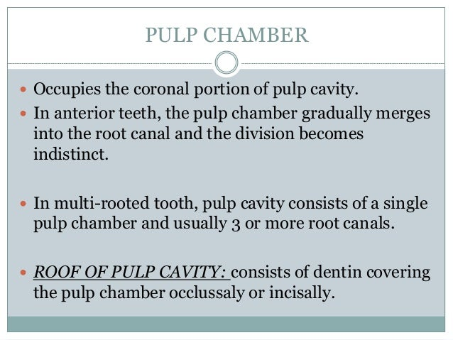 Anatomy Of Pulp Chamber