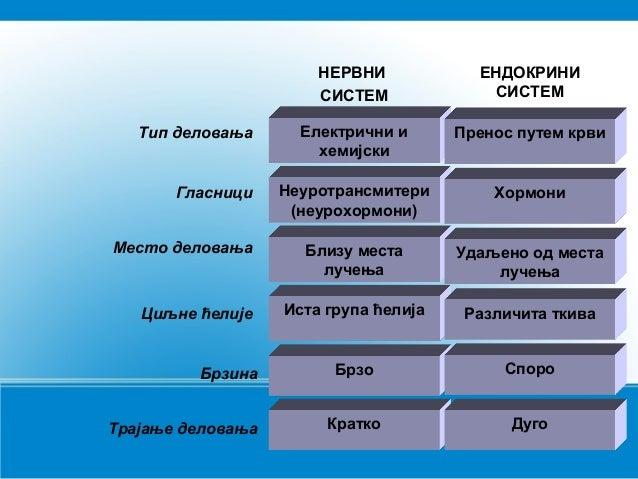 Endokrini sistem  Slide 3