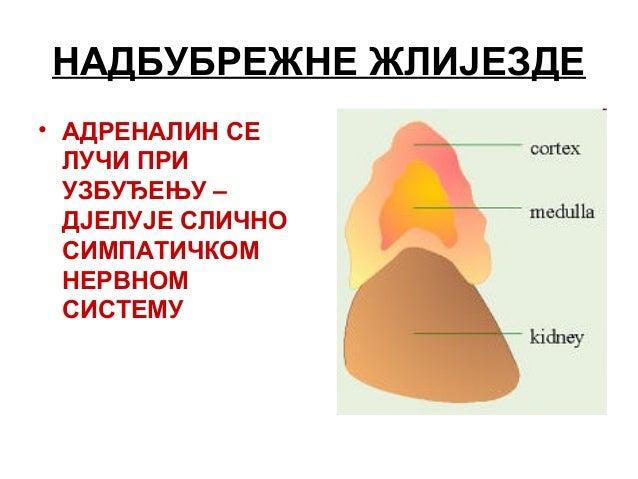 повышенный холестерин проблемы с жкт