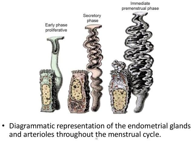 Histomorphological Patterns of Endometrium in Infertility