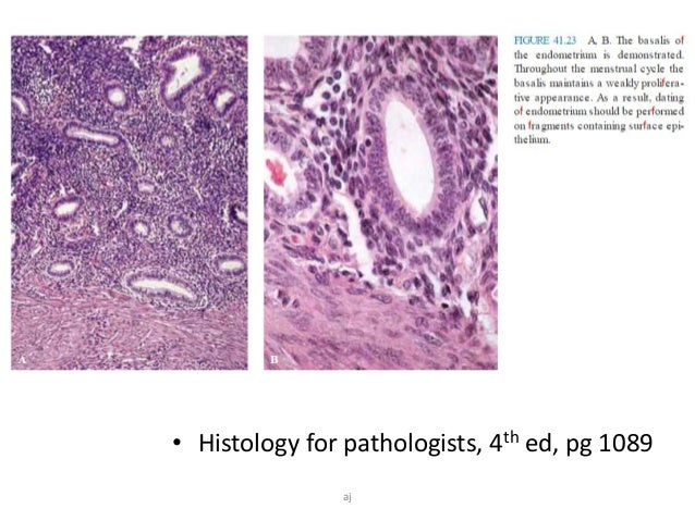 endometrium dating histologie
