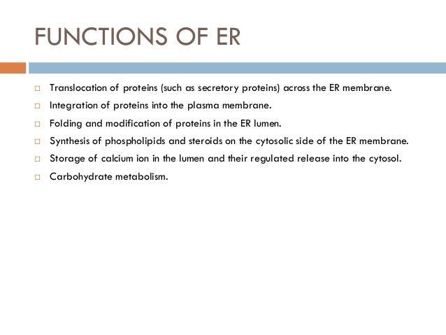 endoplasmic reticulum 1