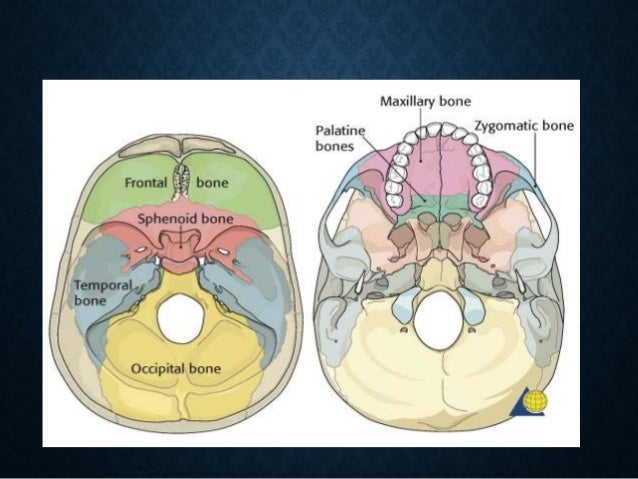 Anatomy of sphenoid sinus